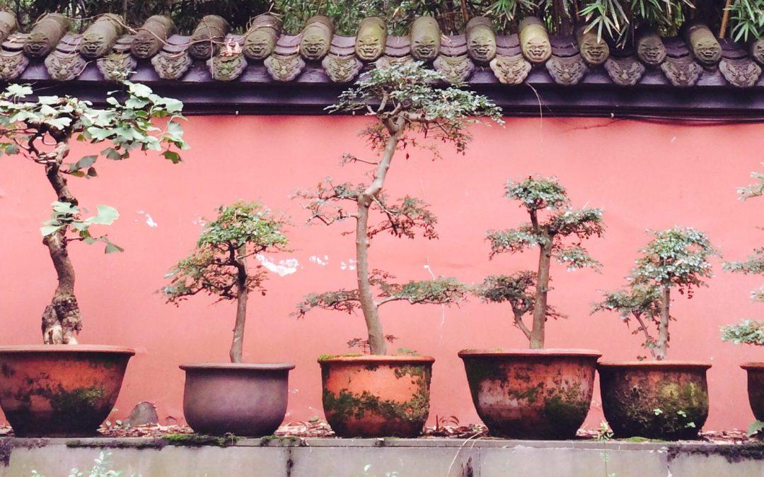 Azie Blog#7 Wonderlijk China